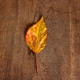 Dried autumn leaves placed on wooden plate Royalty Free Stock Photos
