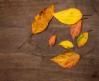 Dried autumn leaves placed on wooden plate Stock Photography
