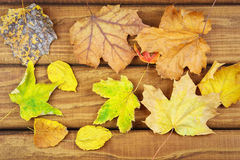 Dried autumn leaves on the table. Stock Photos