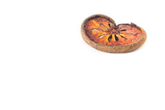 Dried bael fruit 1 piece. Copy space Royalty Free Stock Image