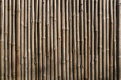 Dried Bamboo Background Stock Photo