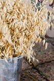 Dried bamboo Royalty Free Stock Photos