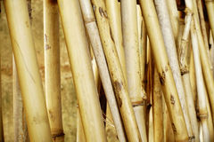 Dried bamboo fence background Stock Image