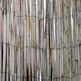 Dried bamboo fence Royalty Free Stock Image