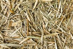 Dried bamboo leaves Royalty Free Stock Images