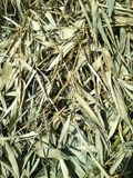 Dried bamboo leaves Stock Photo