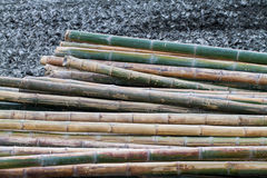 Dried bamboo Royalty Free Stock Photography