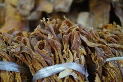 Dried bamboo shoots Stock Images