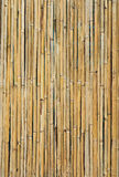 Dried bamboo wall Stock Photography