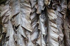 Dried banana leaves Stock Photography