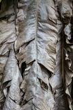 Dried banana leaves Royalty Free Stock Image