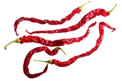 Dried Bangalore WT chile annuum x frutescens, top, paths. Dried Bangalore Whippet`s Tail chile peppers C. annuum x C. frutescens cross. Clipping path, top view Royalty Free Stock Photography