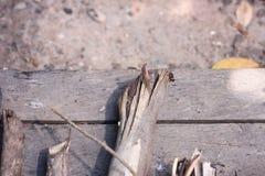 Dried bark gray dead trees. Royalty Free Stock Image