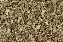 Dried Basil Leaves Macro stock photos