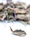 Dried basil leaves Stock Images