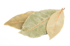 Dried Bay (Laurel) Leaves Stock Photo
