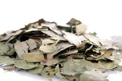 Dried bay leaf Stock Photos