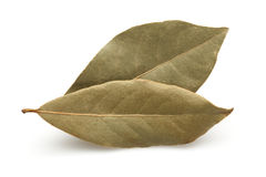 Dried Bay Leaf Stock Images