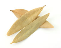 Dried bay leaves Stock Photo