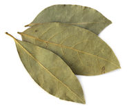 Dried Bay Leaves Stock Photos