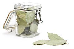 Dried bay leaves Stock Images