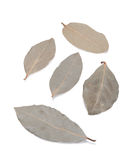 Dried bay leaves. On a white background Stock Image