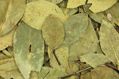 Dried bay leaves background Stock Images