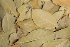 Dried bay leaves. Best flavoring. Top view. Food Background. Healthy food. Natural food stock image