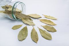 Dried bay leaves in glass jar Royalty Free Stock Image