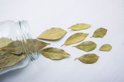 Dried bay leaves in glass jar. On white wooden background Stock Photography