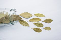 Dried bay leaves in glass jar on white. Wooden background Stock Photography