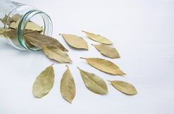 Dried bay leaves in glass jar on white. Wooden background Stock Photo