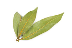Dried bay leaves Stock Image