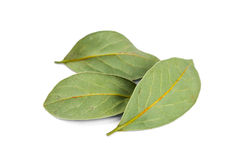 Dried bay leaves Stock Photography
