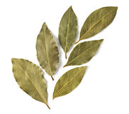Dried bay leaves Royalty Free Stock Photos