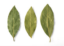Dried bay leaves isolated Stock Photography