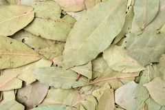 Dried bay leaves Royalty Free Stock Photo