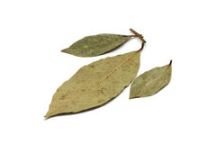Dried bay leaves Royalty Free Stock Photography