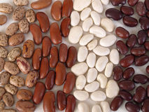 Dried Beans. Assorted dried Beans separated and placed into vertical rows Royalty Free Stock Images