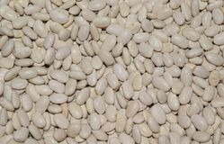Dried beans, background. Dried beans in details, background Royalty Free Stock Image