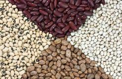 Dried beans Stock Photos