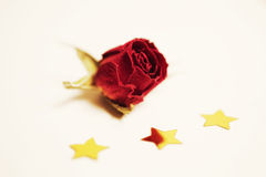 Dried beautiful flower of red rose Royalty Free Stock Images