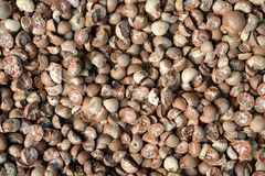 Dried beetle nuts Royalty Free Stock Images