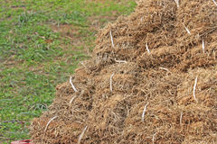 Dried bermuda grass Stock Images