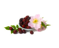 Dried berries and flowers of wild rose Stock Images