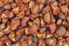 Dried Betel Nut or Areca Nut Stock Photo