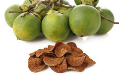 Dried Betel Nut Stock Photo