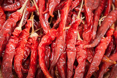 Dried big chili Royalty Free Stock Images