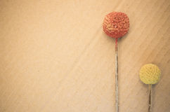 Dried billy buttons. On a paperboard background Stock Photography