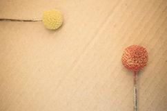 Dried billy buttons. On a paperboard background Stock Photos